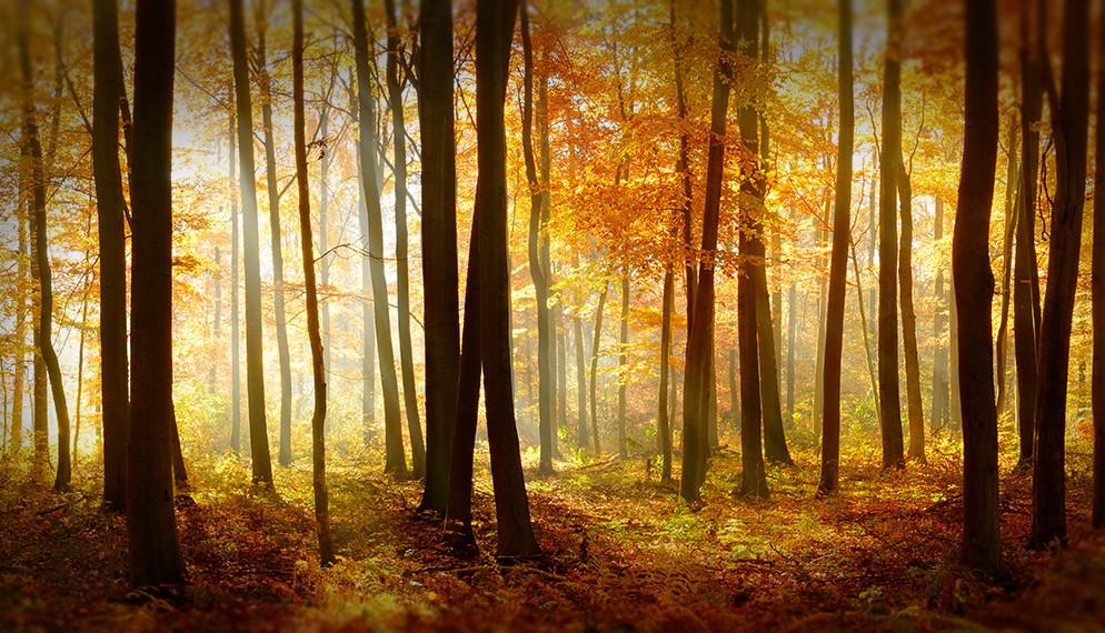 Auto et habitation : mettez-vous à l'automne !